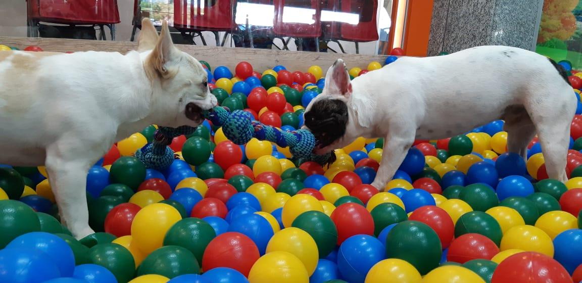 Pet Play: Um Mundo de Diversão para o seu pet!